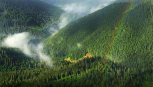 Costel Alexe: 50 de milioane de copaci vor fi plantați în acest an