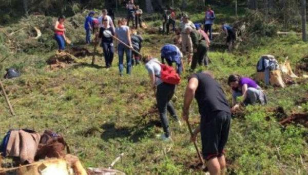 """Costel Alexe anunţă că vor fi plantate """"de la zero"""" 2.500 de păduri noi"""