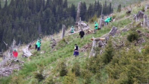 Campanie de împădurire: 50 de milioane de puieţi vor fi plantaţi în acest an
