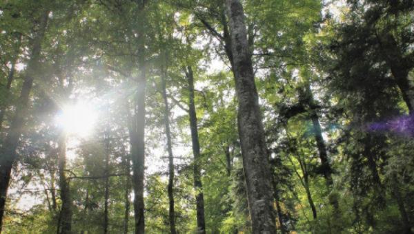 Costel Alexe anunţă că vor fi plantate 2.500 de păduri noi şi vor fi completate 7.000 de păduri tinere