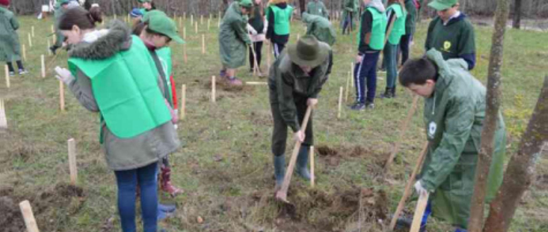 Începe programul de împădurire. Romsilva trimite puieți pentru plantare în județul Brașov